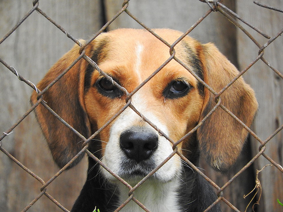 Comment faire pour débarrasser vos chiens de vers intestinaux ?