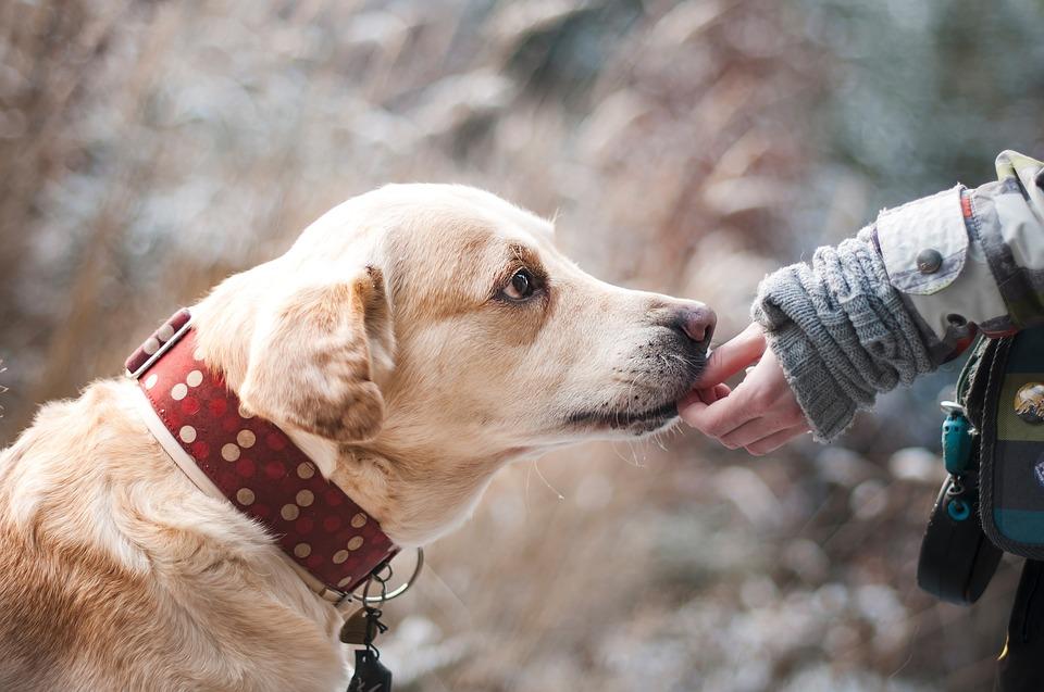 La formation de chien, le guide qu'il vous faut