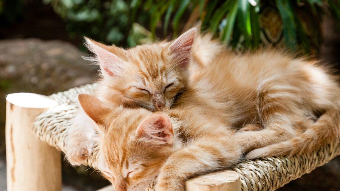 Bien prendre soin de son chat: ce qu'il faut savoir