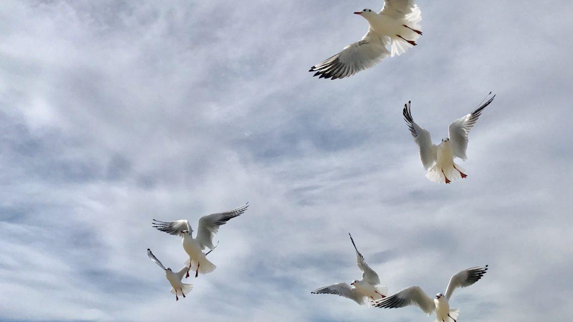 Faire partir les oiseaux de son jardin sans leur faire de mal