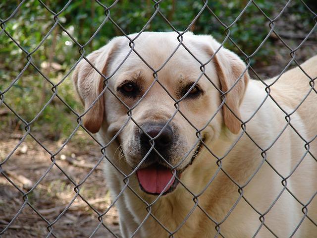 Pourquoi installer un chenil pour chien