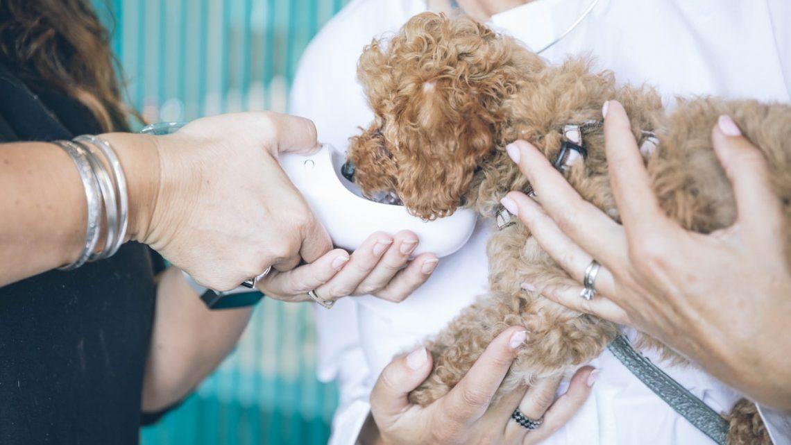 Le médecin des animaux : Trouvez un vétérinaire en France
