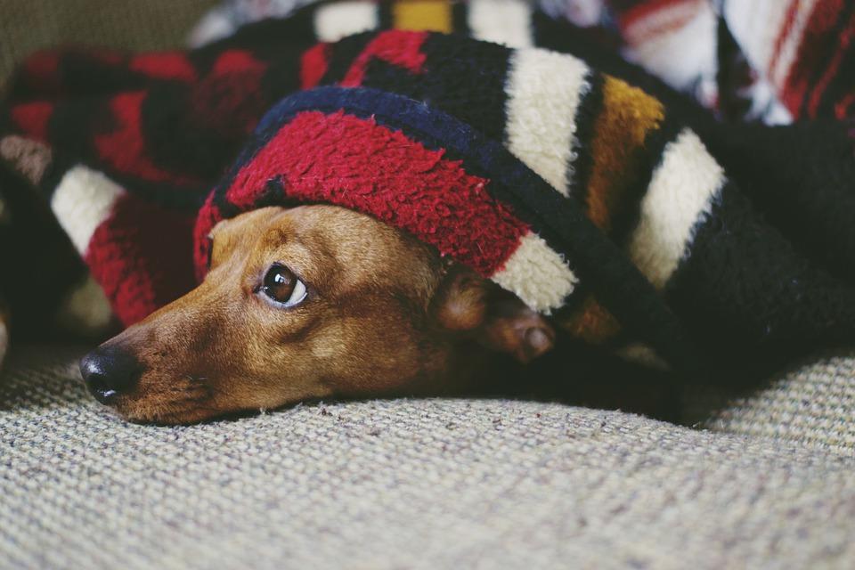 Chouchouter votre chien avec des vêtements de qualité