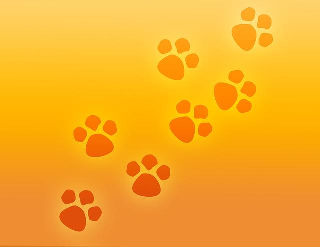 La pelade du chat : une maladie à ne pas négliger