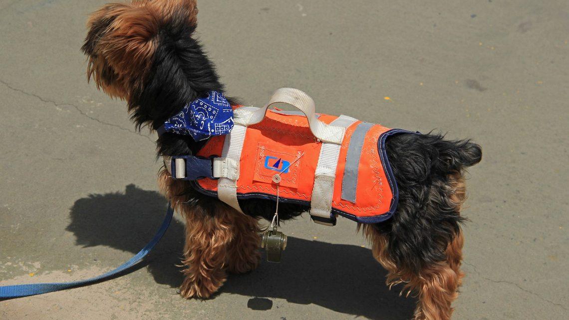 Les utilités d'un gilet de sauvetage pour chien