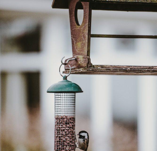 Quelle cabane à oiseaux choisir en fonction de l'espèce ?