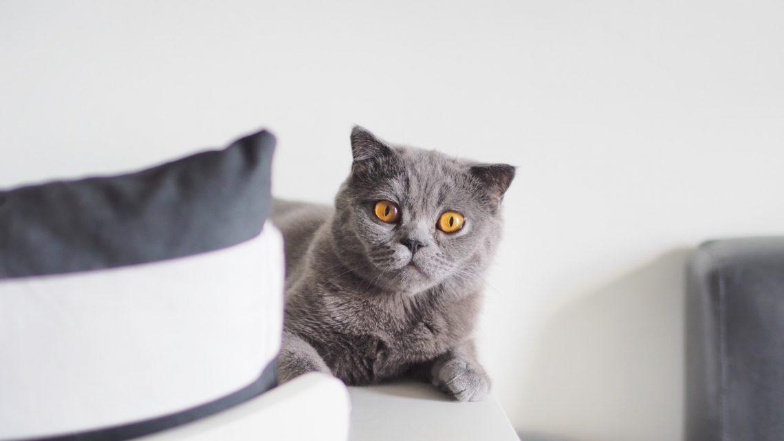 Peut-on laisser un chat dormir dehors ?