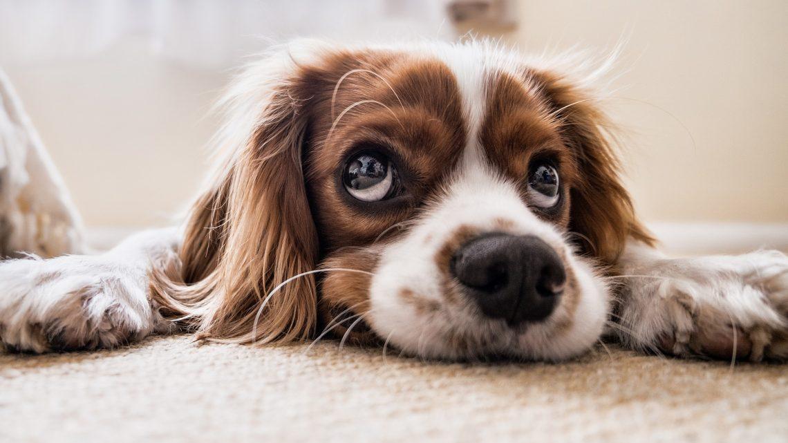 Pourquoi souscrire une assurance santé pour son animal de compagnie ?