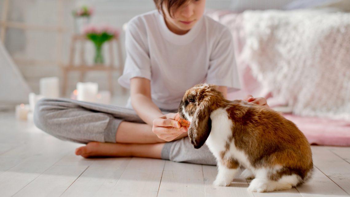 Que faut-il prendre en considération avant d'adopter un lapin ?